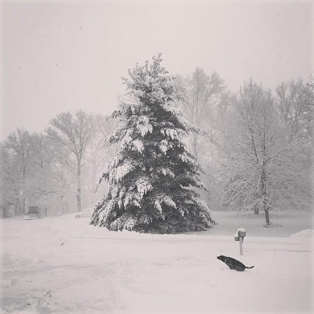 snowwithB